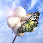 Butterfly on Cotton Ball | Barnhardt Cotton